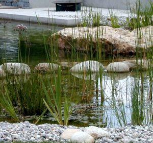 mehr zu Teich Novotan